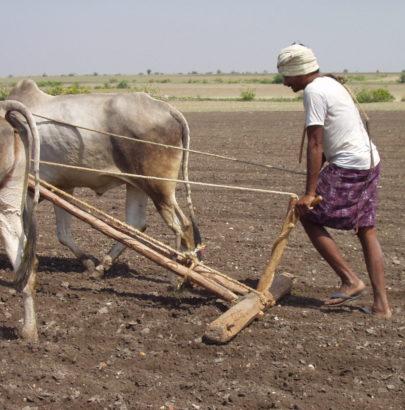 Farming in Telangana