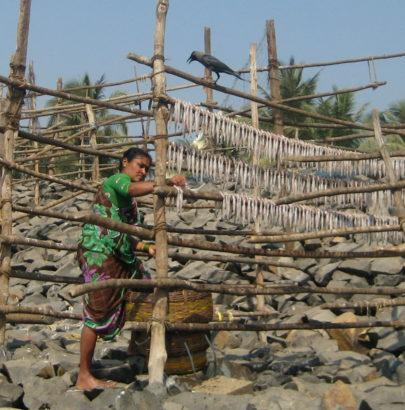 drying fish in Mumbai